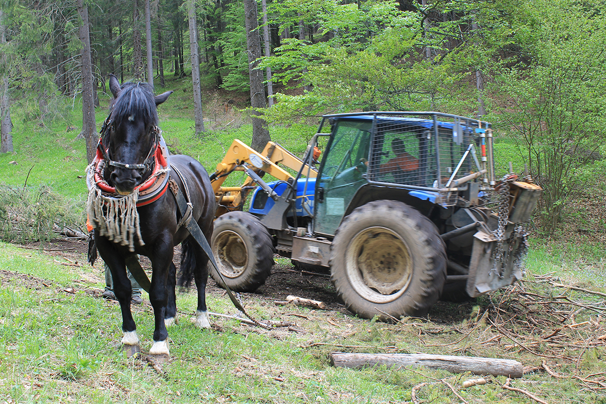 Horse and Tractor