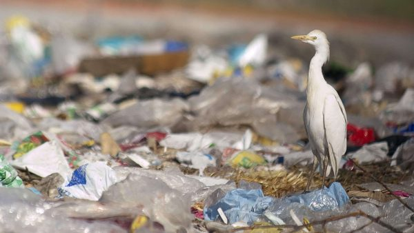 Plastic pollution to reach 1.3bn tonnes by 2040