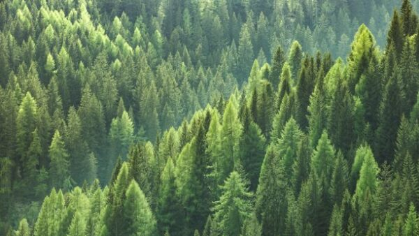 State of Europe's Forests 2020