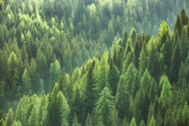 State of Europe's Forests 2020   Sustainable Paper Packaging & Print   TwoSide